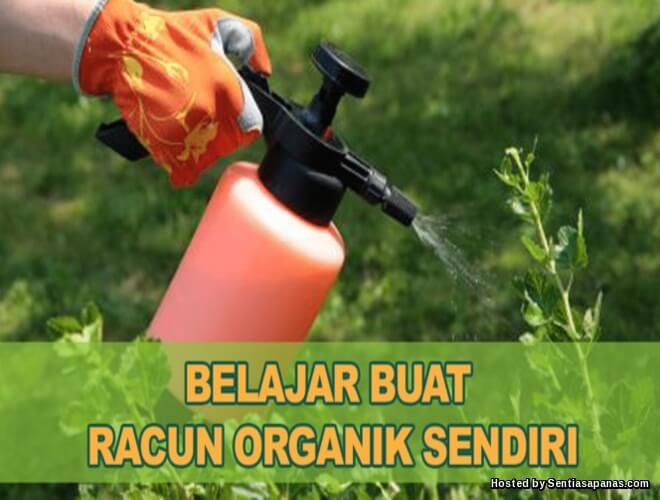 Cara Mudah Membuat Racun Organik Sendiri