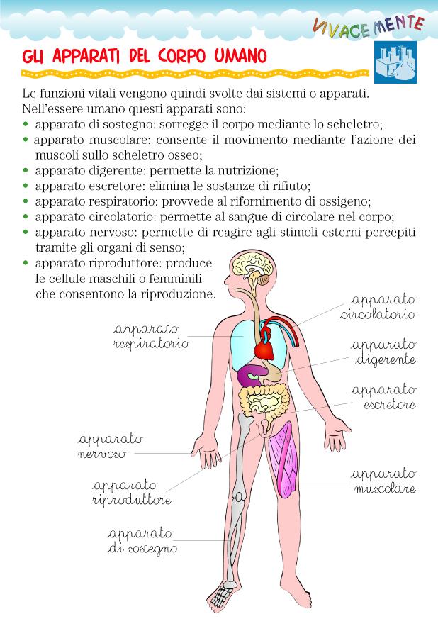Amato VIVACEMENTE con il cuore e con la mente: Apparati e organi del  DX41