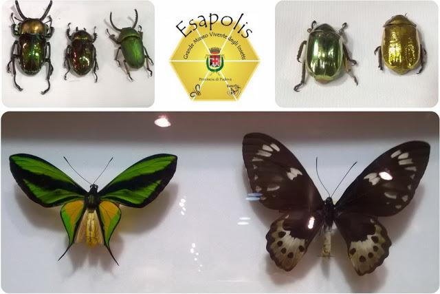 musei di insetti in Italia