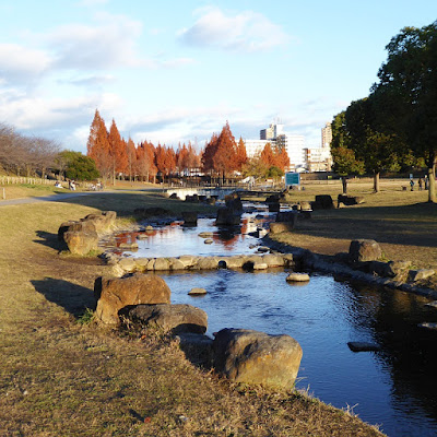 打上川治水緑地 『せせらぎ』とメタセコイアの紅葉