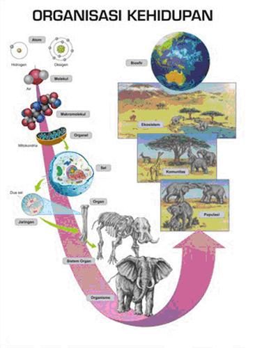 tingkat organisasi kehidupan biologi
