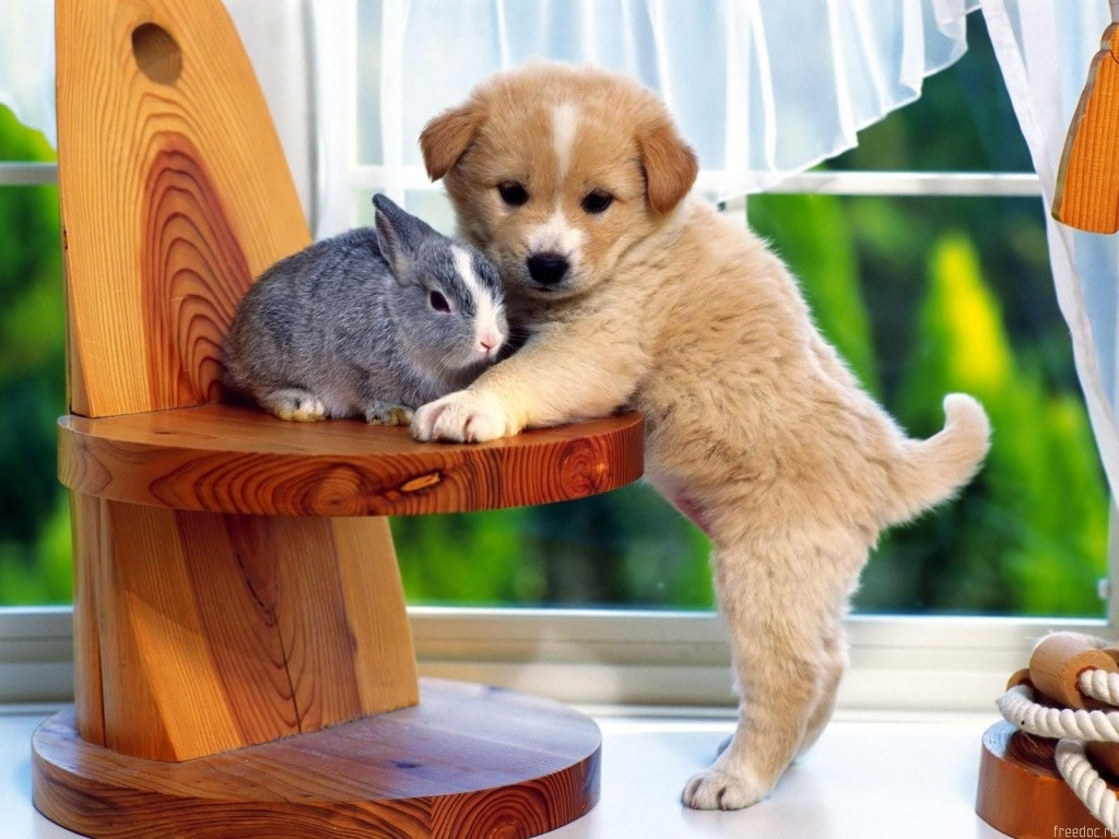Cute Funny Puppies Wallpapers | Kitten And Puppy