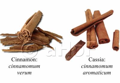True Cinnamon and Cassia Cinnamon