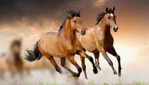 sueño-con-caballos-que-numero-jugar-en-la-loteria