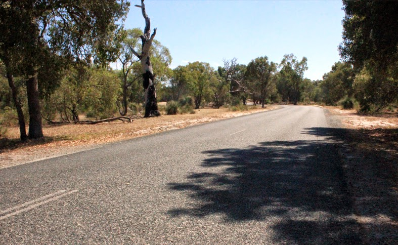 Caversham Wildlife Park Perth Kangaroos Koalas Close To Them