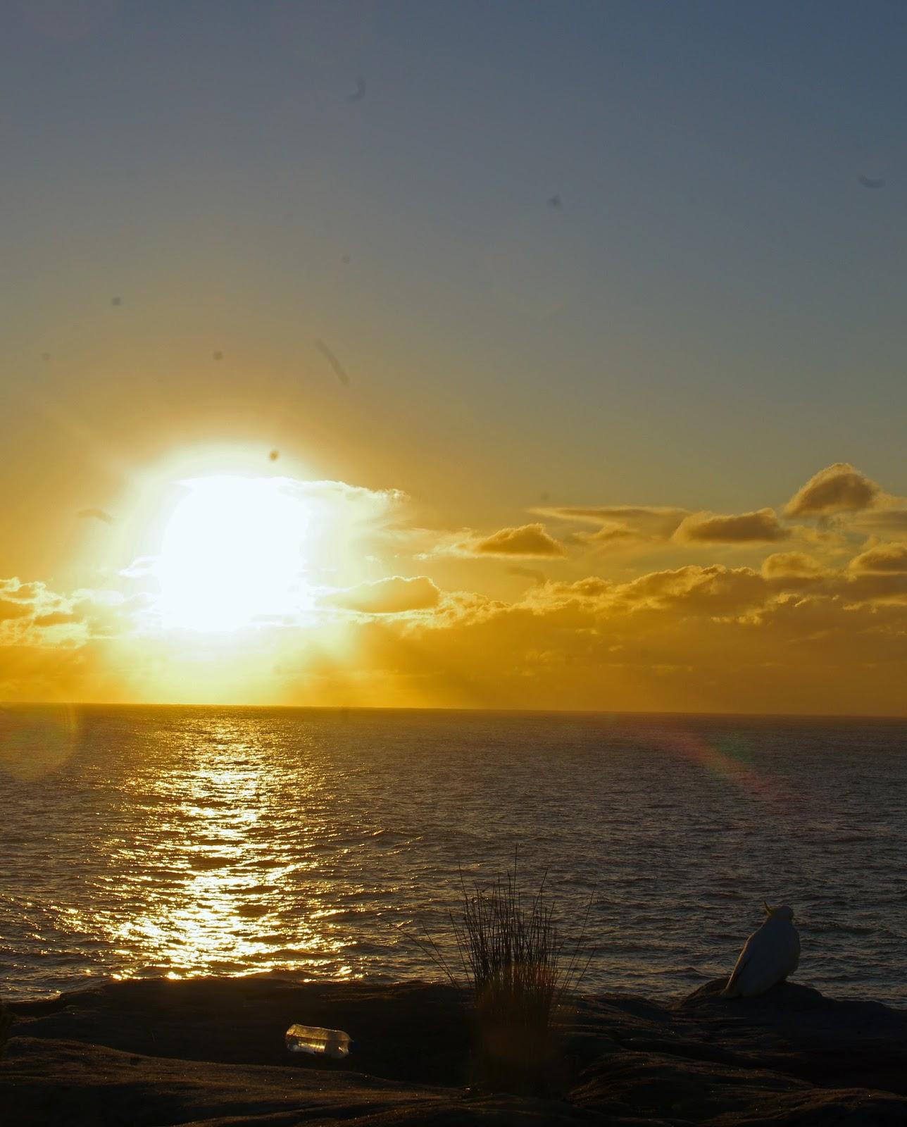 bright sunrise in sydney