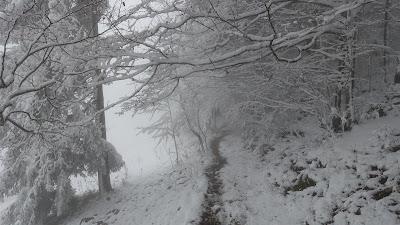 Nebulöser Singletrail auf knapp 1300 m