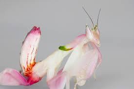 https://2.bp.blogspot.com/-_U-2YFgZ2aM/WSnCEL6FbEI/AAAAAAAABlM/ZE0OiWb4sGsy4sMoJTpd7ogOBp7IkyeqACLcB/s1600/flower.jpg