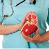 Mengenal Fungsi Ginjal Dan Tips Menjaga Kesehatan Ginjal