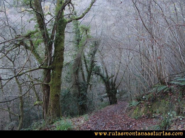Area Buyera, picos Grandamiana y Plantón: Bajando de Castañedo del Monte, bosque.