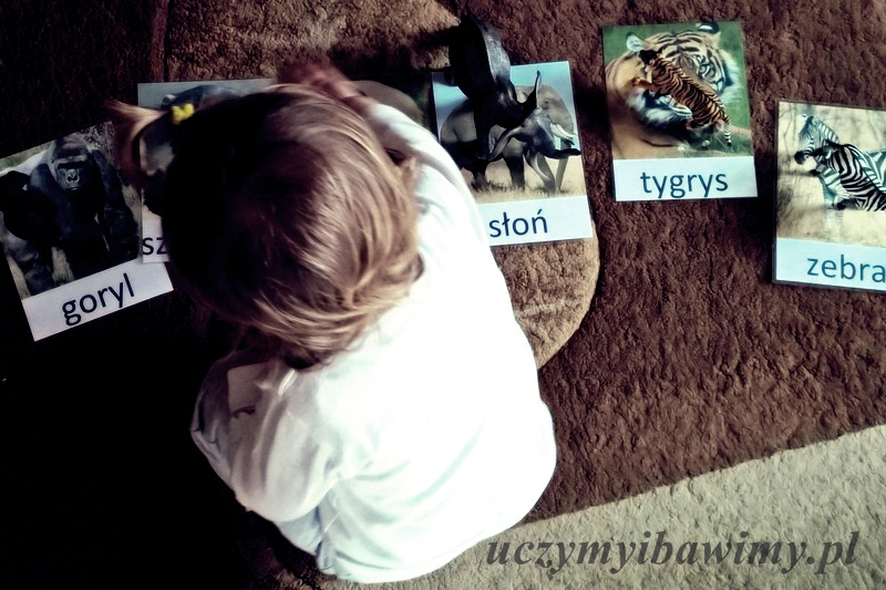 Roczniak i karty Montessori