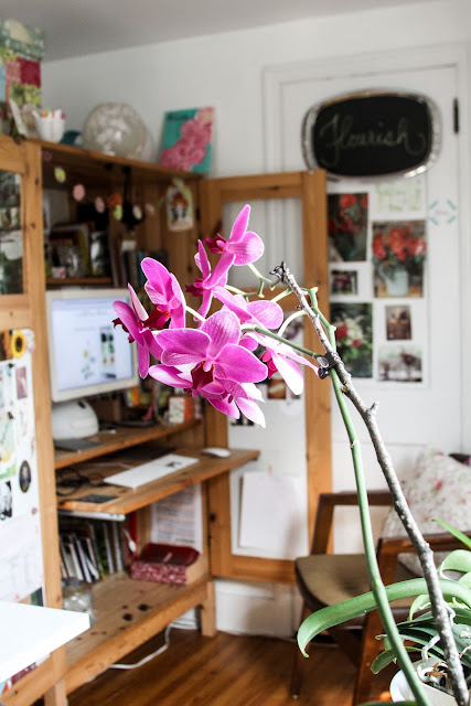 orchids, studio, work space, desk, inspiration, Anne Butera, My Giant Strawberry