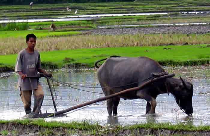 Teknologi Modern Dalam Bidang Pertanian Global Tekno