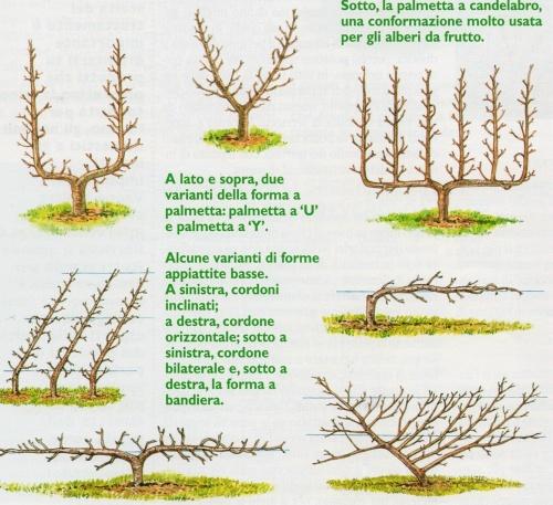 Professione donna alberi e piante da frutto come sceglierle for Potatura piante da frutto