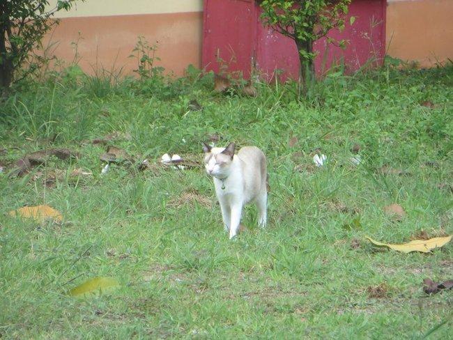 Белая кошка идет по траве