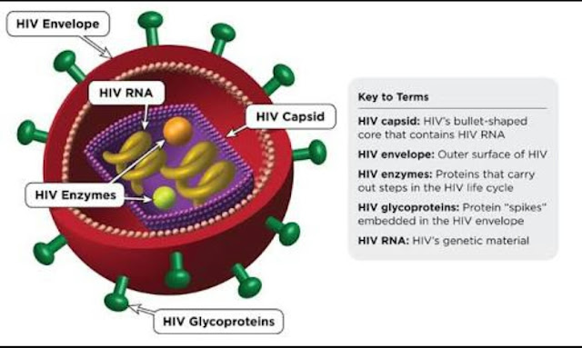 How HIV Affects The Neurological Functioning in The Body