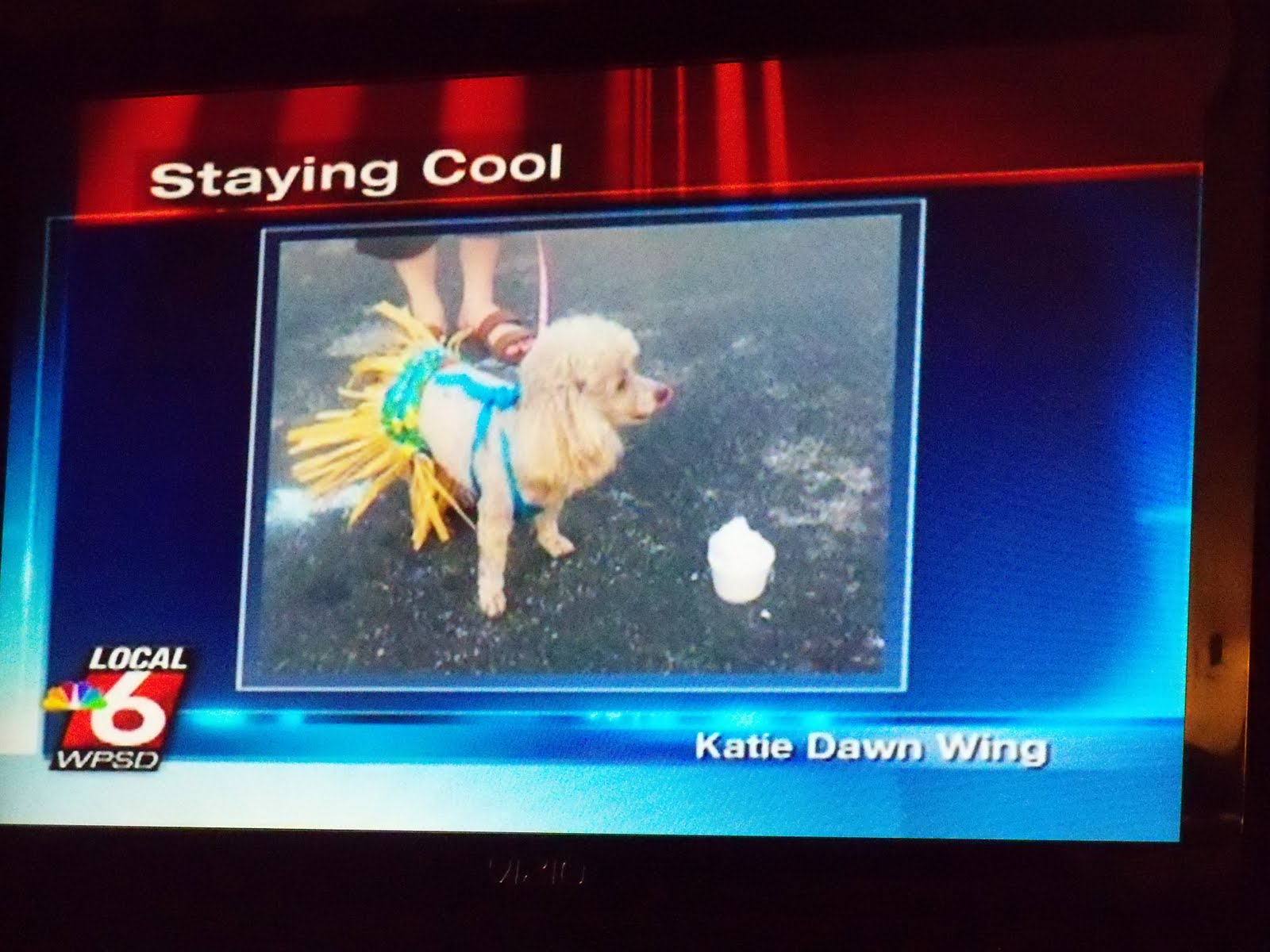 Dog Eared: Mollie Jo goes to WPSD Local 6