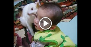 Affectionate Kitty Truly Loves Her Tiny Human