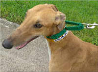 Mercury at Friends of Greyhounds