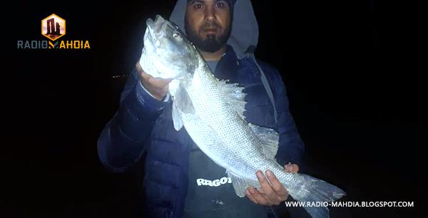 أكبر سمكة قاروص