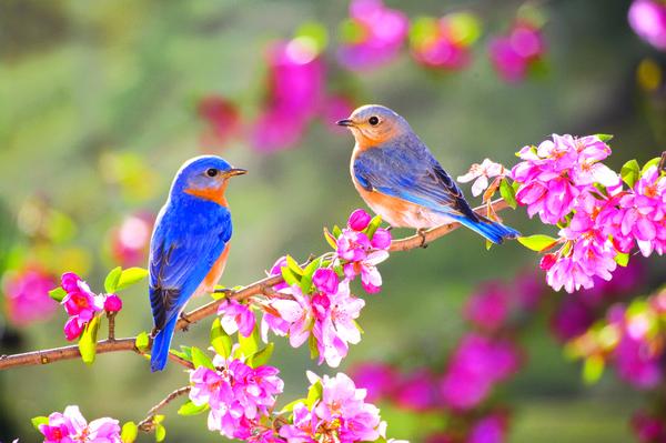 Fonds D Ecran Hd Fond D Ecran Gratuit Printemps Oiseaux