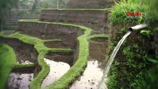 Subak - Sistem Pengairan Sawah Irigasi Tradisional Bali
