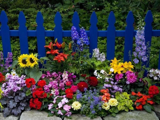 Boje cvetova i boje u okruženju u međusobnoj kombinaciji