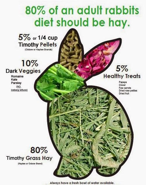 Cara memelihara kelinci makan bagan makanan sehat untuk ternak kelinci