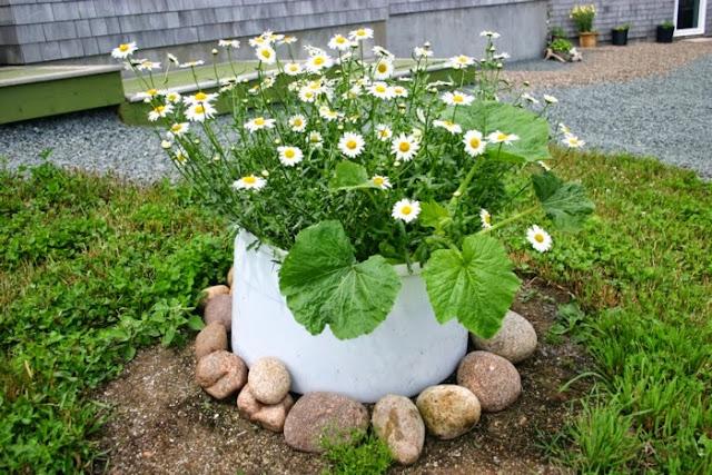 Garden decor with found objects: wild daisies