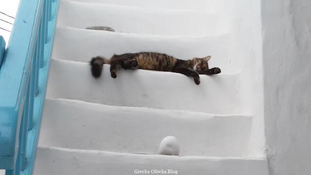 grecka sjesta, śpiący kot na białych schodach w Chora Mykonos, Grecja