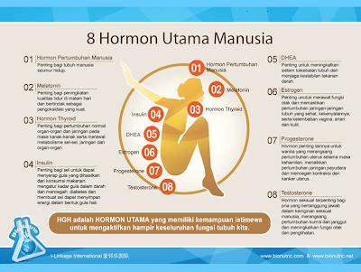 Image result for 8 HORMON UTAMA MANUSIA