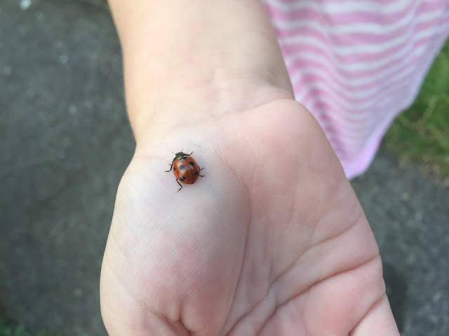 holding a ladybird for my pet pal challenge