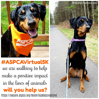rescue dog doberman mix aspca 5k walk
