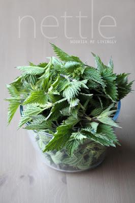 fresh_nettle_herb