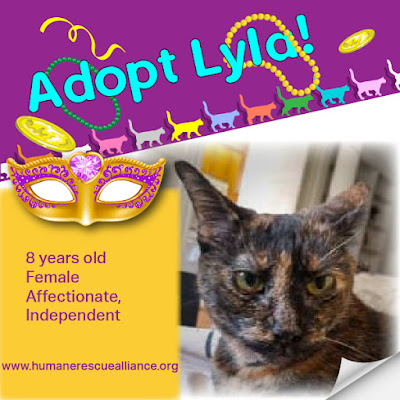 Adopt Lyla, 8-yr-old Tortie female, Humane Rescue Alliance, Washington, DC