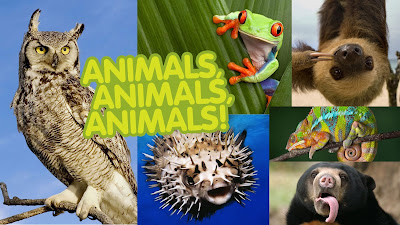http://www.kizoa.es/Editar-Vídeos-Movie-Maker/d199307902k7307244o1l1/animals