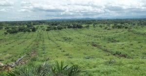 Colombia. Un 1 % de propietarios ocupa el 80 % de las tierras del país