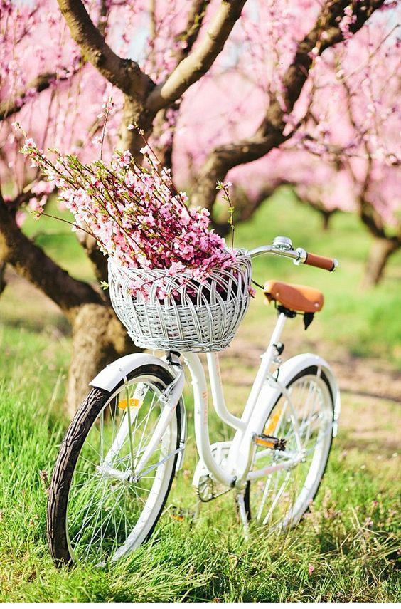 PUNTXET Hello Spring