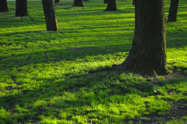 zieleń miejska, trawnik, pierwsze oznaki wiosny
