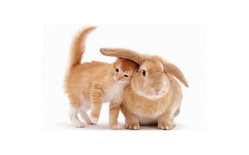 memelihara Kelinci Mampu Meniru kucing kelnci dan kucing bisa tinggla serumah asal tidak ada yang larang kata cak lontong