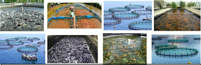 Requirement for Bank of Industry (BOI) Fish Farming Fund