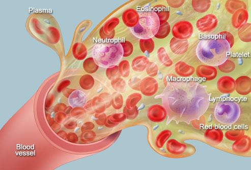 Cara kerja plasma darah dalam membunuh virus corona