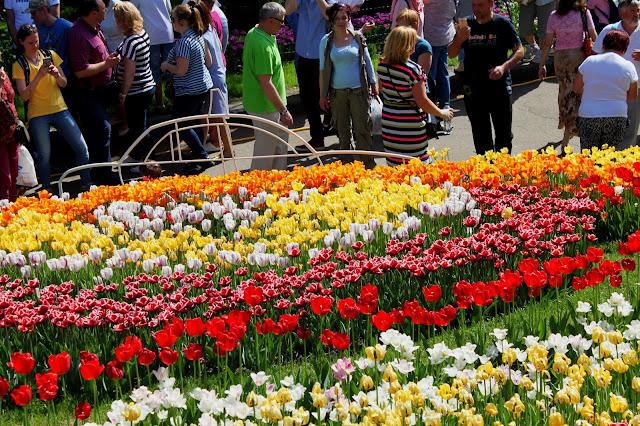 Тюльпаны на склоне Певческого поля