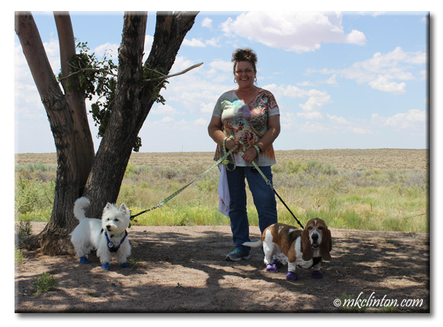 Basset Hound and Westie with M. K. Clinton in the Petrified Forest