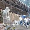 【宇治上神社】日本最古老神社建築 兔子形狀神籤超萌