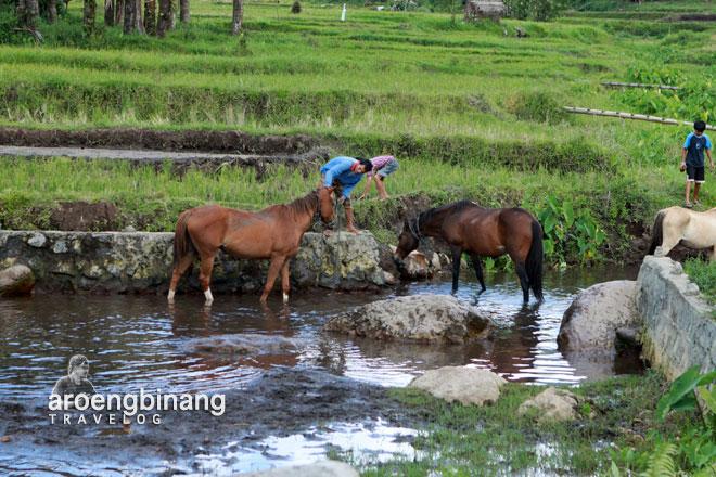 kuda watu pinawetengan minahasa sulawesi utara