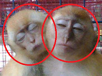 Kocak..! Inilah 4 Asal Mula Kata Cinta Monyet