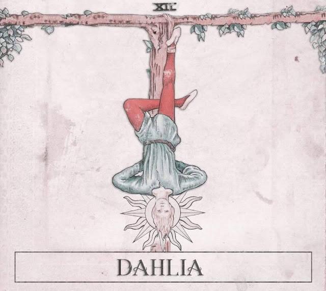 Dahlia XII