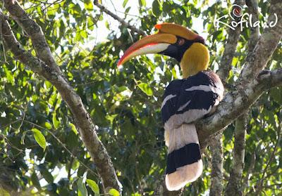 Birding in Thekkady
