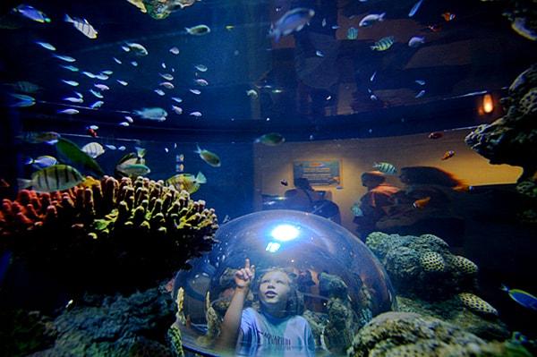 Johor Legoland Aquarium